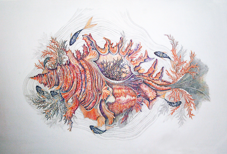 Nature morte au coquillage, 2012, 100cm x 70cm, crayons de couleurs et stylo bille Collection privée
